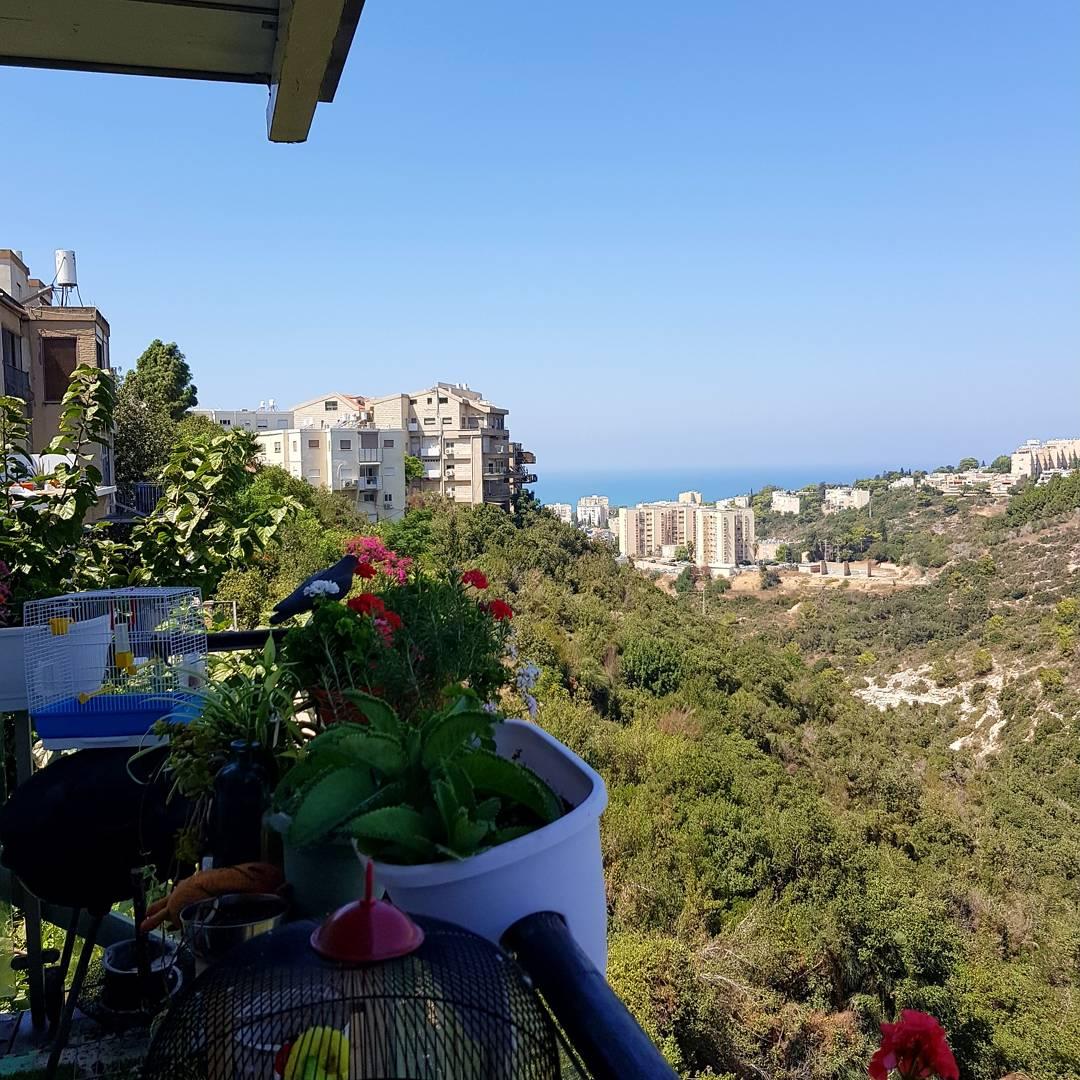 מתווכים בחיפה, משרדי תיווך בחיפה, מתווך בנשר, ניהול נכסים בחיפה, חברות אחזקה בחיפה, ניהול נכסים מסחריים, חברה לשיווק פרויקטים בחיפה, מתווכים מומלצים בחיפה